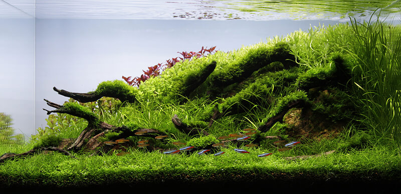 All you need to know about Nature Aquariums