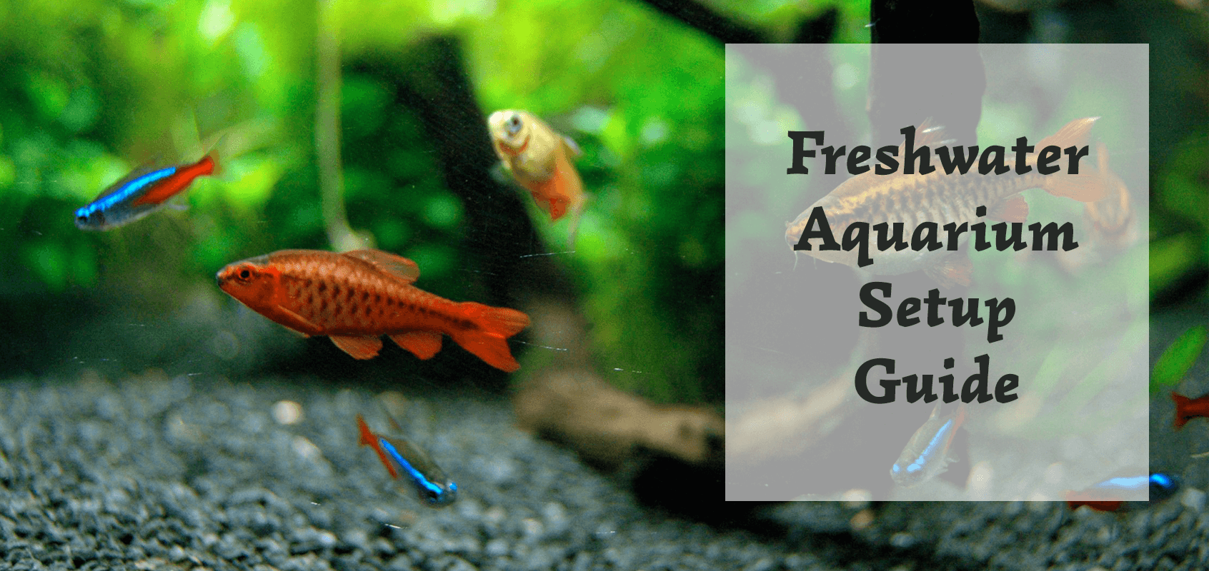 Freshwater Aquarium Setup - Step-by-Step Guide - AquariumGuide.net